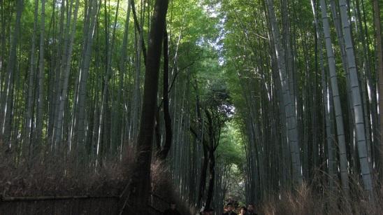 arashiyama 5