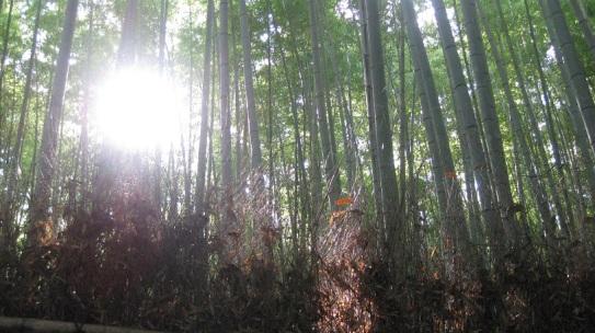 arashiyama 6