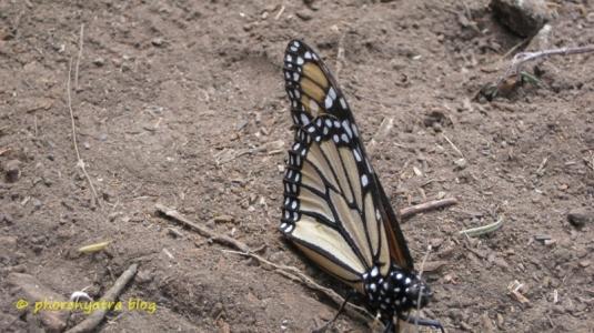 monarca23