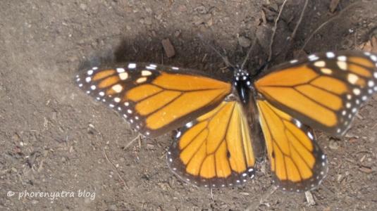 monarca24