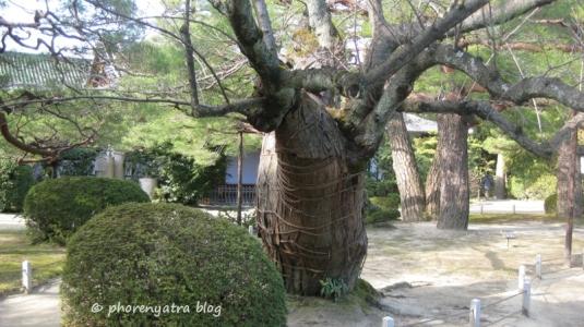 heian garden 21