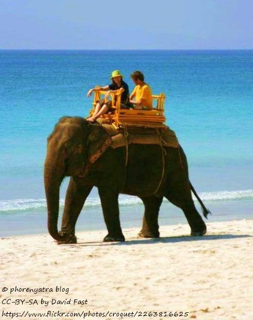swimming elephant andaman india