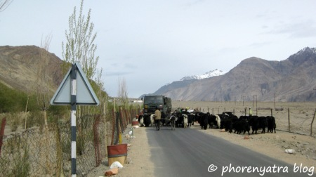 yak traffic jam ladakh