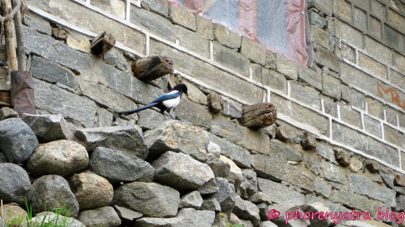 turtuk magpie