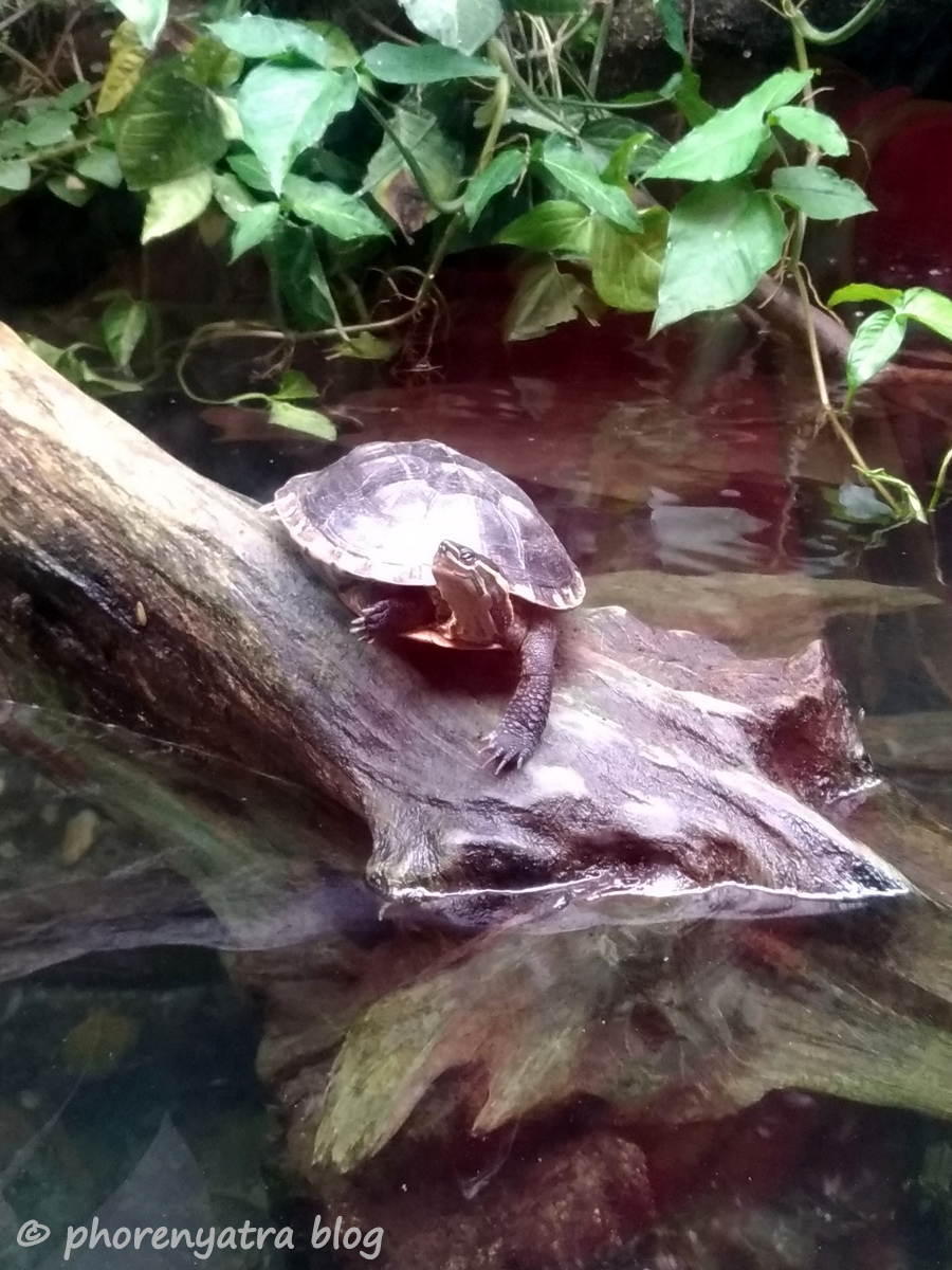 Turtle at Singapore Zoo