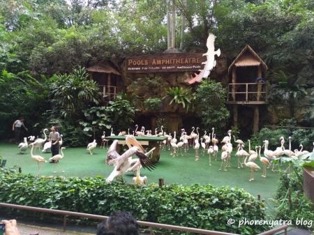 high flyers show jurong bird park