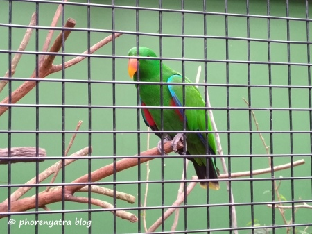 green parrot at jurong bird park